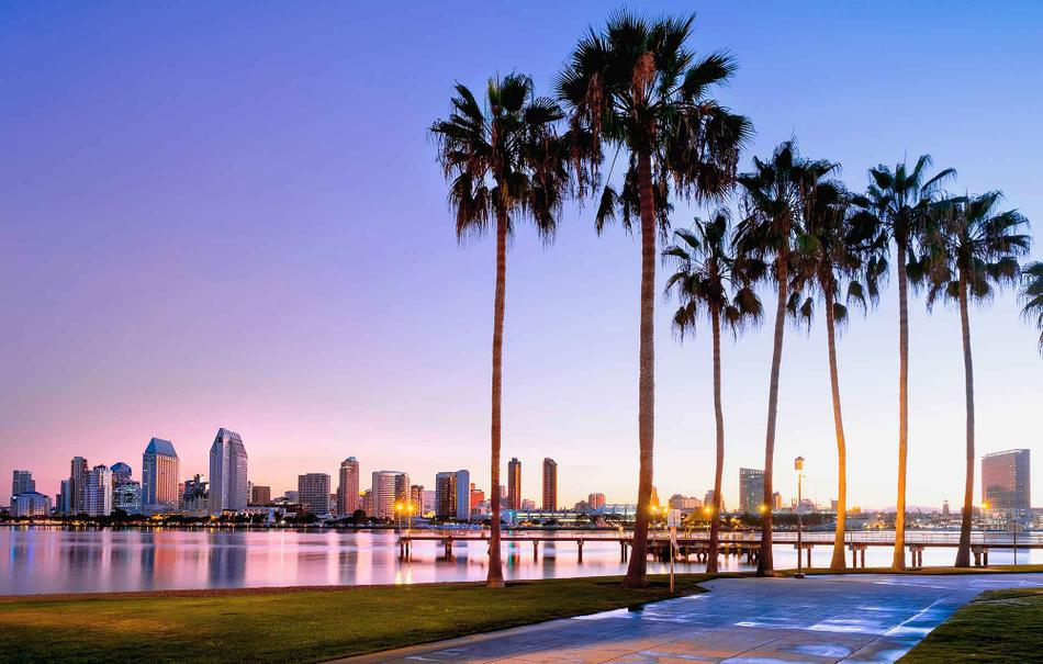 A view of the San Diego skyline and palm trees.